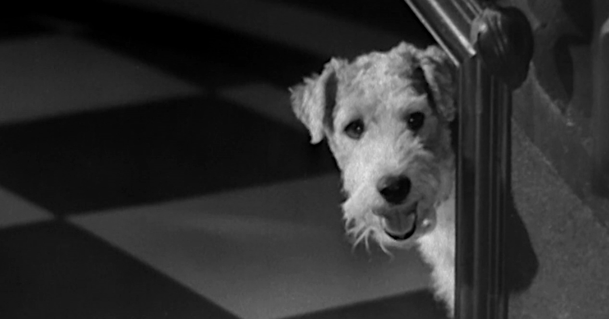 Movies! TV Network | A Dog with Bite: Asta
